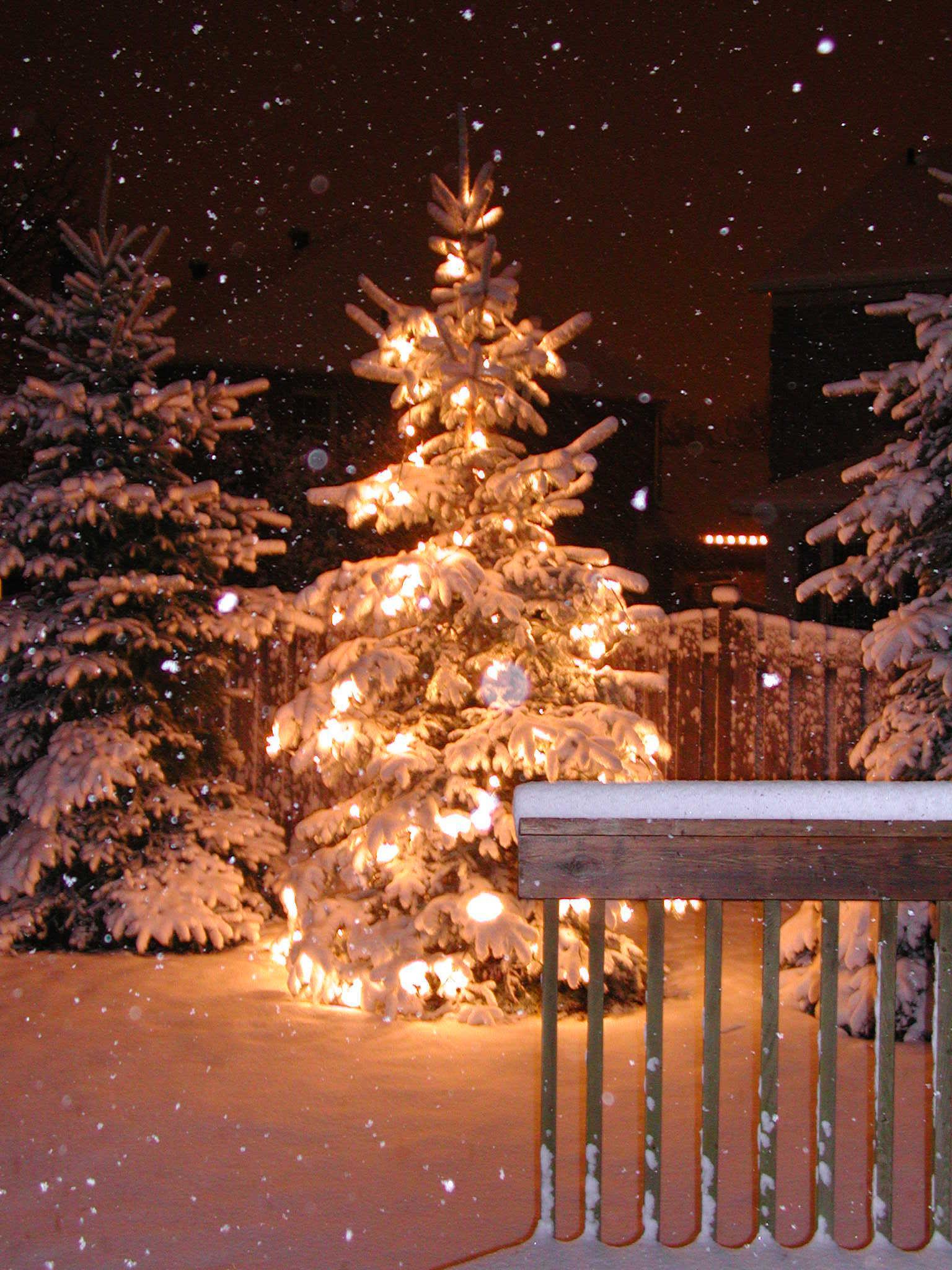 Bästa julgranarna i Småland